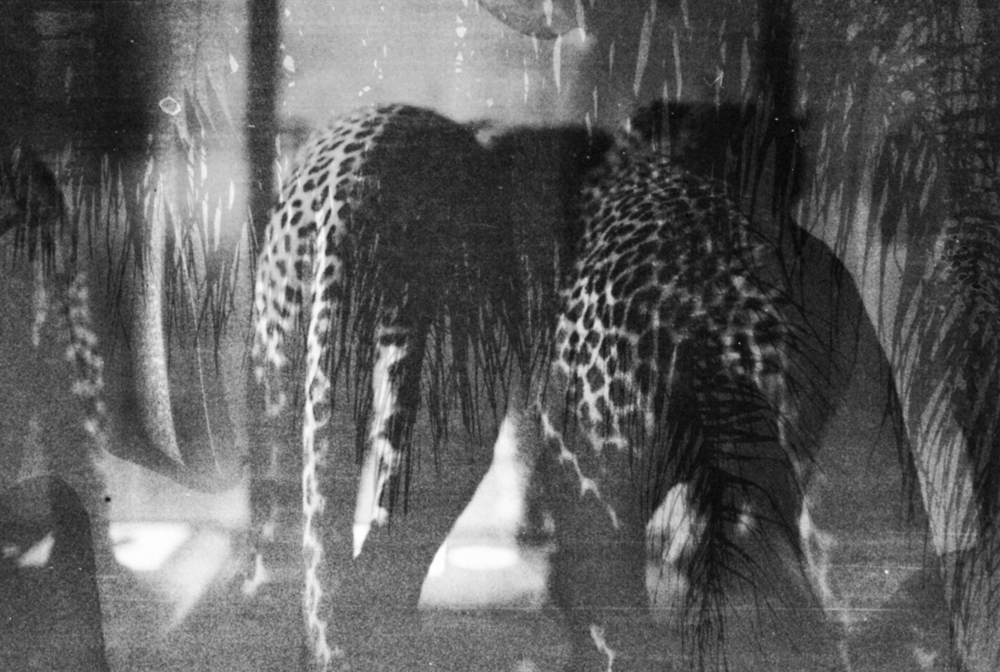 Basim Magdy      Tropical Disguise  , 2013, black and white inkjet print from pickled negatives on matt photo paper, framed, 33 x 48.3 cm.   This piece is part of an ongoing investigation on the numerous possibilities that manipulating film with household chemicals offer. The final image is a double exposure constructed from a picture taken at a tropical location, and another at the Museum of Hunting in Paris.