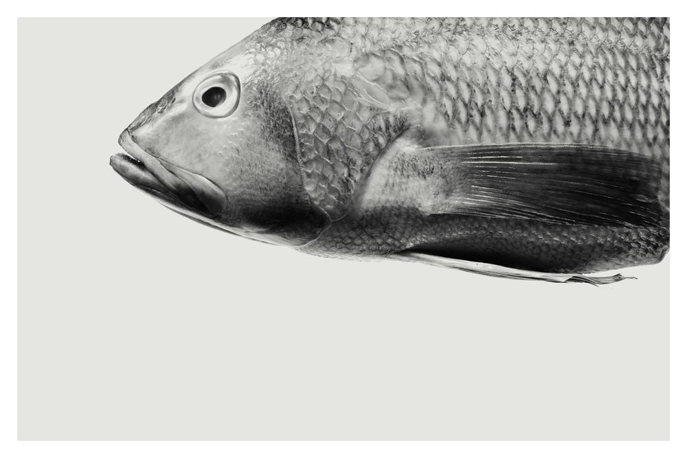 edmondng_fab_fabbrica_fish.jpg