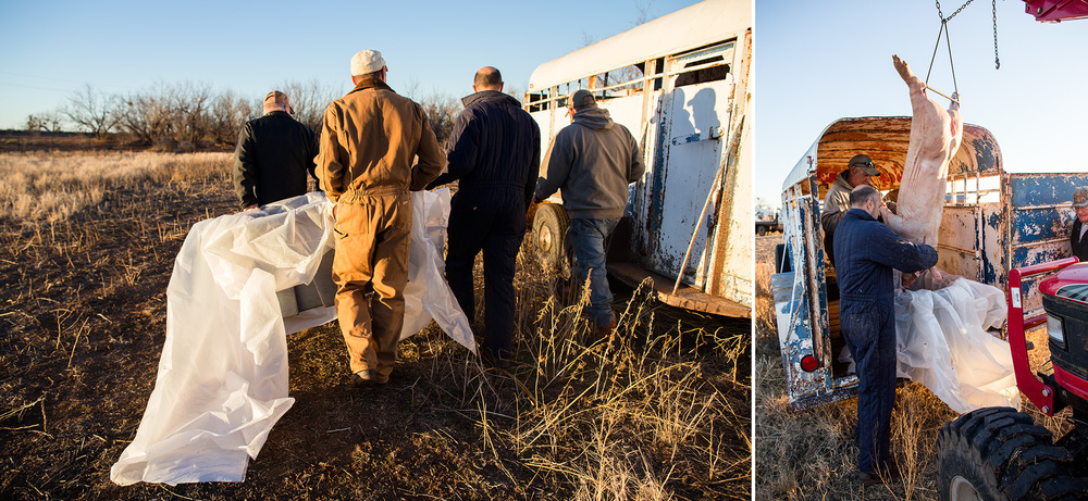 The pig wasn't going to be cooked until the day after we cleaned it since it was getting dark, and it was going to take too long to get the pit built and the pig seasoned properly. To keep the pig safe from wildlife, we wrapped it in plastic and placed it in a cattle trailer.
