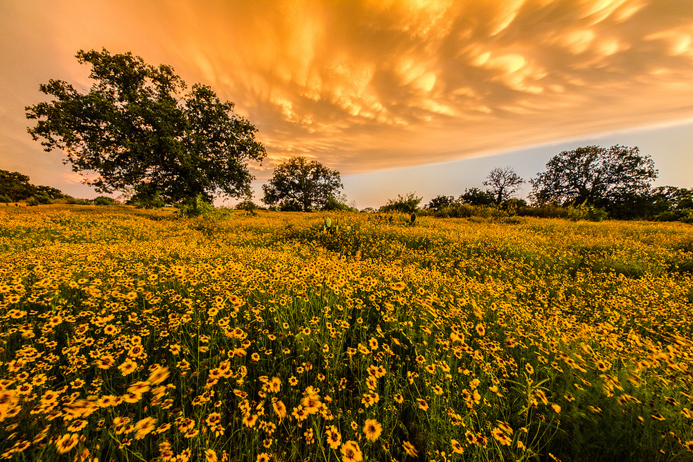 "May 30, 2012 - near Mason, TX Canon 60D, 8-16mm f/4.5-5.6 Now we're talking. This is a photo from my Junction photography class taught by the great Jerod Foster. Before this, I had never had a field class of any type, so having the privilege of spending two weeks shooting nothing but the Texas Hill Country really taught me a lot about ""finding the light"" so to speak.  We also got a lot of access to areas that are generally closed to the general public such as Dolan Falls on the Nature Conservancy as well as Mason Mountain and the surrounding area. But even beyond that, this picture was actually taken during what I can only assume were very rare circumstances. The sun was just beginning to go down, and we had been driving around Mason Mountain for about 30 minutes trying to find a photogenic spot to shoot some landscapes. This was the last day of the class and our second time at Mason, so we were looking for something different than what we shot earlier in the class. Well, low and behold, favor shone upon us and a thunderstorm rolled in just as we were getting a bit discouraged with how the evening was turning out.  This wasn't just an ""Oh look it's dark and cloudy thunderstorm either. We were right on the edge where the sun was just peaking under the bottom, lighting it up with brillian oranges and yellows.  Just like with the image I took from the plane, this was just a natural anomaly that none of us could have ever predicted. Even Jerod said, in the ten years that he had been attending the class - Wyman Meinzer used to teach the class and 2012 was the first year Jerod took it over - this had never happened before."