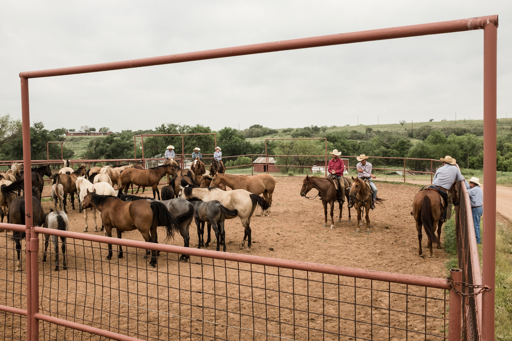 Before the branding, the cowboys get the colts and mares into one pen. All of the mares in this pen were bred by a single stud, and there were four sets of colts/mares that were worked. Each group was divided by the different stud horses that bred the mares.