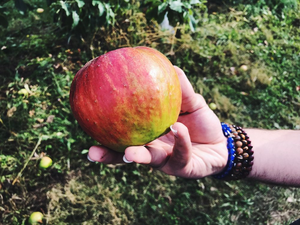 the biggest apple and a beautiful hand
