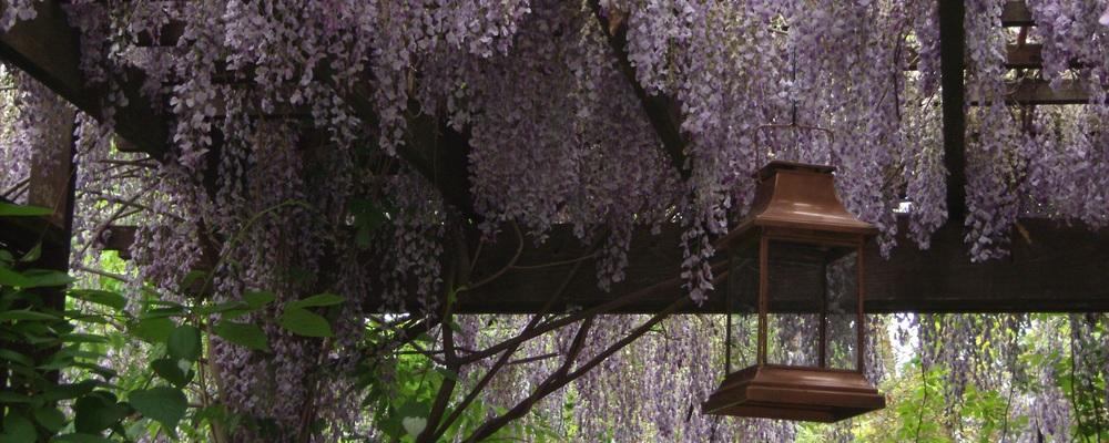 spring 2010 camera 119333.jpg