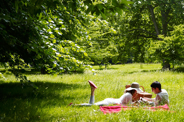 picnic_.jpg