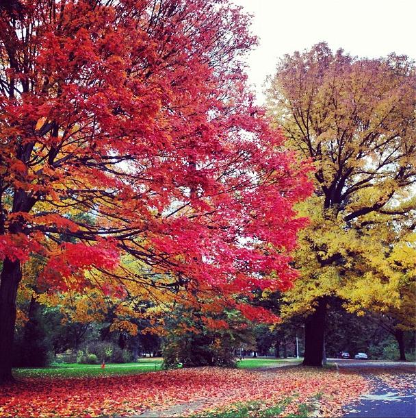 Prospect Park Foliage