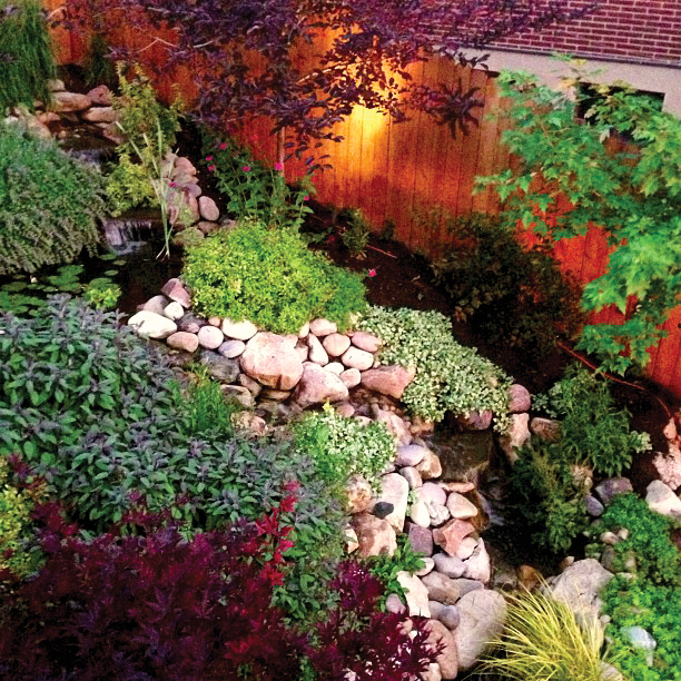 Backyard pond and landscape by Mott's Landscaping