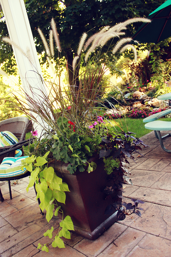 Mott's Landscaping-Potted Plants 1.jpg