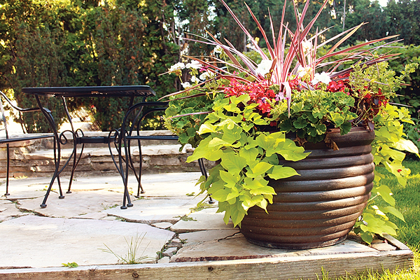 Mott's Landscaping-Potted Plants 2.jpg