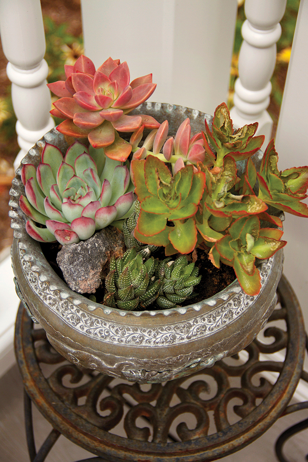 Potted Succulents 2-Jordan.jpg