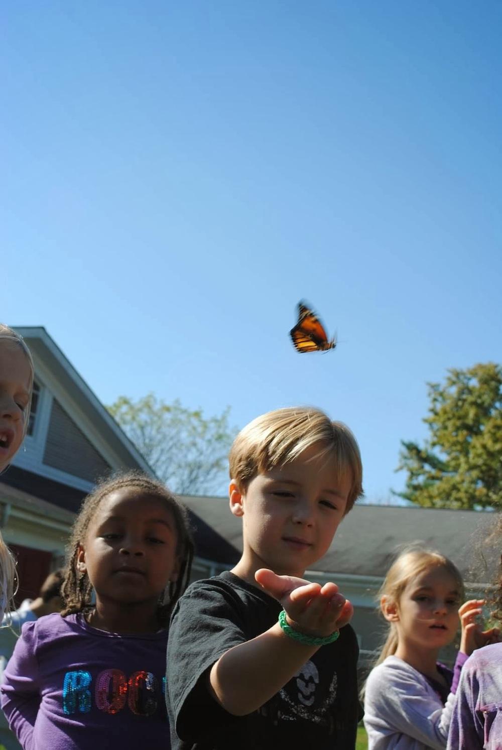 butterfly release 3.jpg