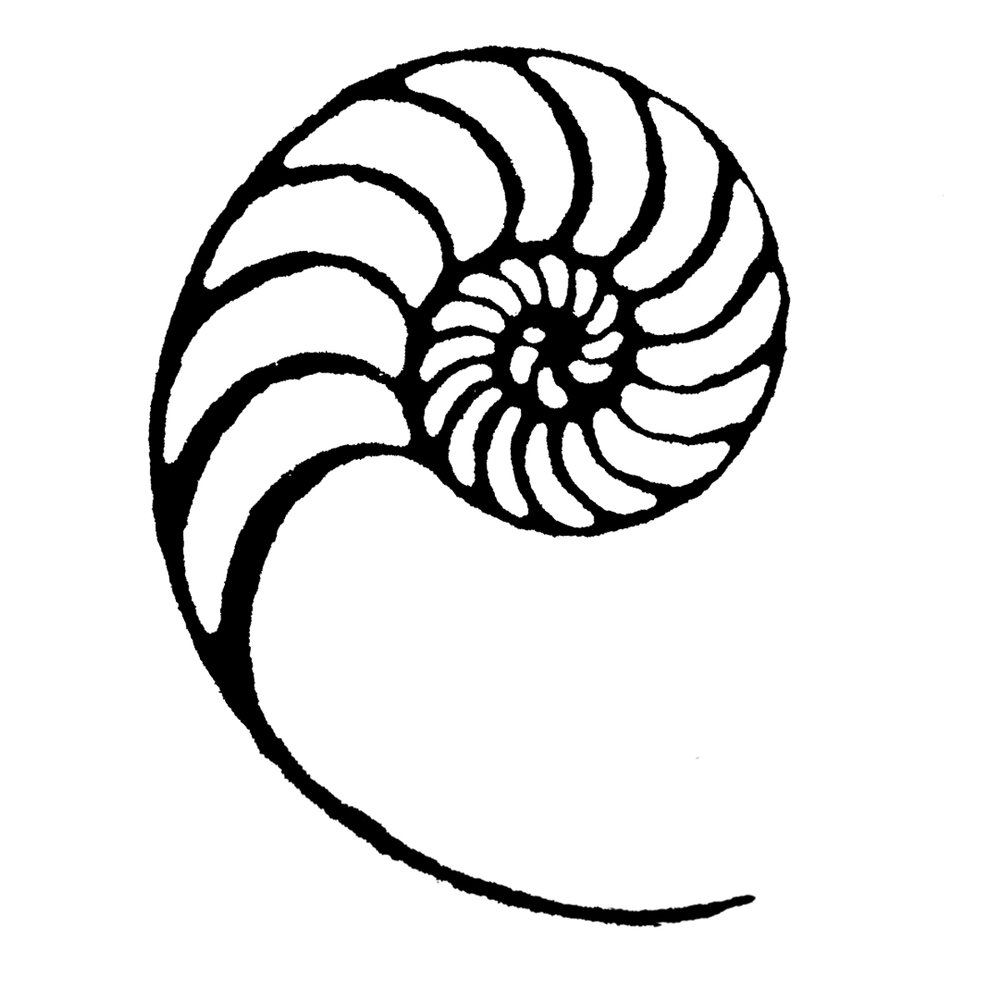 black and white nautilus.jpg