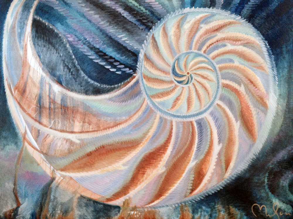 naked nautilus copy.jpg