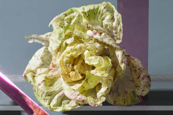 produce_of_the_future-1-castelfranco_chicory-2.jpg