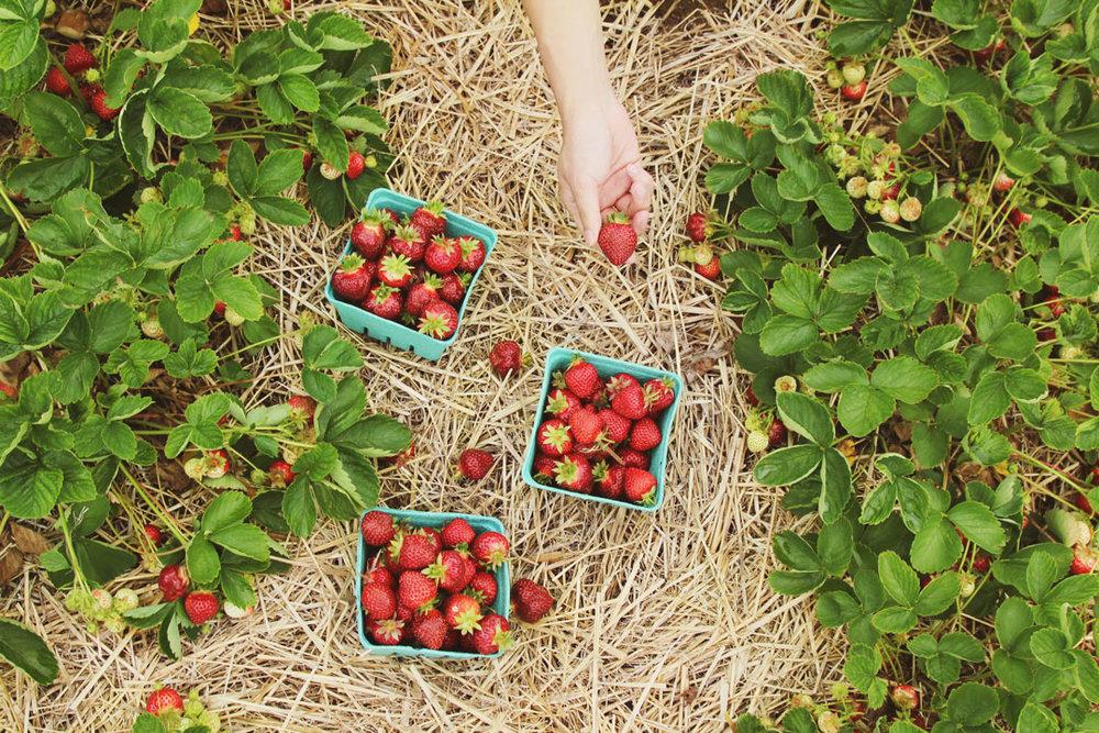 returning_to_organic_farming.jpg