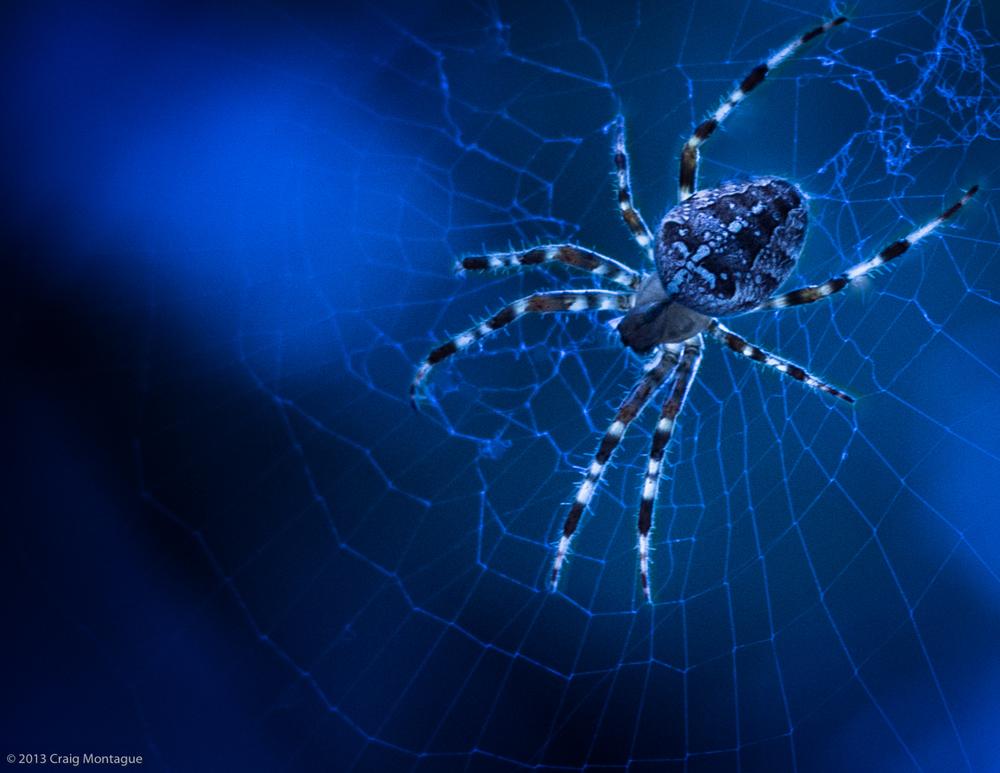 Halloween_Spider.jpg