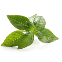 Basil linalol is a great essential oil for beauty.