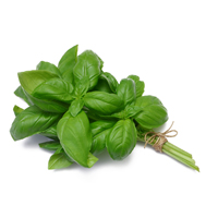 Sweet basil essential oil is a lovely addition to beauty products.