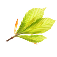 Beech bud herbal extract is best for dry skin and anti-aging.
