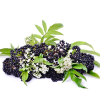 Elderberry is best for