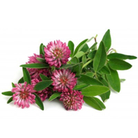 Red clover herbal extract is best for sensitive, dry and combination skin.