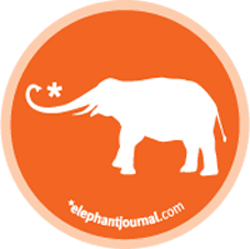 elephant-journal.jpg