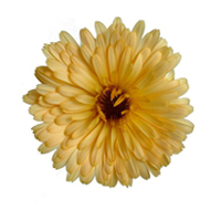 Calendula essential oil is best for blemished skin.