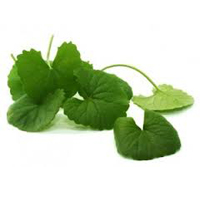 Gotu kola herbal extract is best for mature skin.