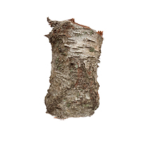 Birch bark herbal extract is best for blemished skin.