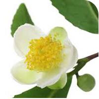 Jojoba seed oil is best for oily skin.