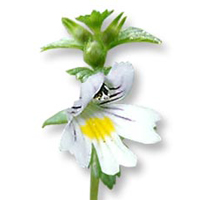 Roman chamomile essential oil is best for sensitive skin.