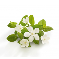Neroli essential oil is best for dehydrated, sensitive, combination, oily, blemished skin, and anti-aging.
