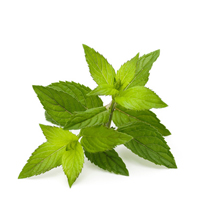 Peppermint leaf herbal extract is best for combination, oily and blemished skin.