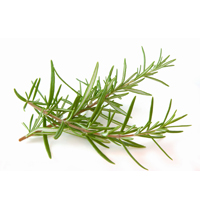 Rosemary essential oil is best for couperose, oily, blemished skin and anti-aging.