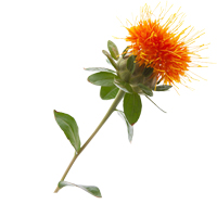 Safflower seed oil is great for all skin types.