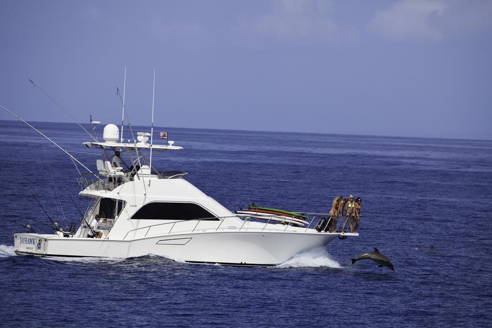 Dolphin bow.JPG