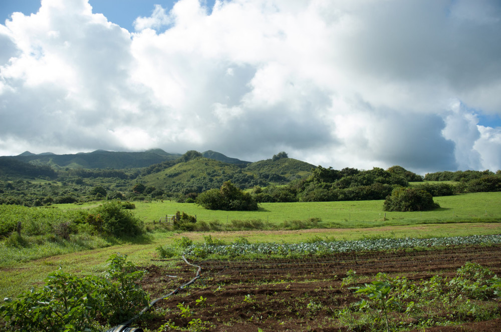 Hana Ranch_FieldwithMountains-1024x680.jpg