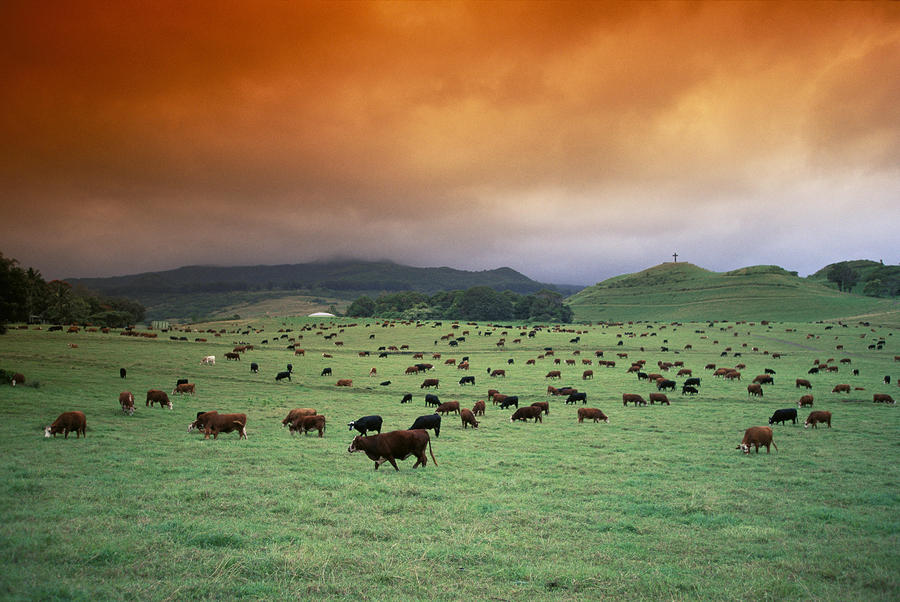 Hana Ranch Pasture.jpg