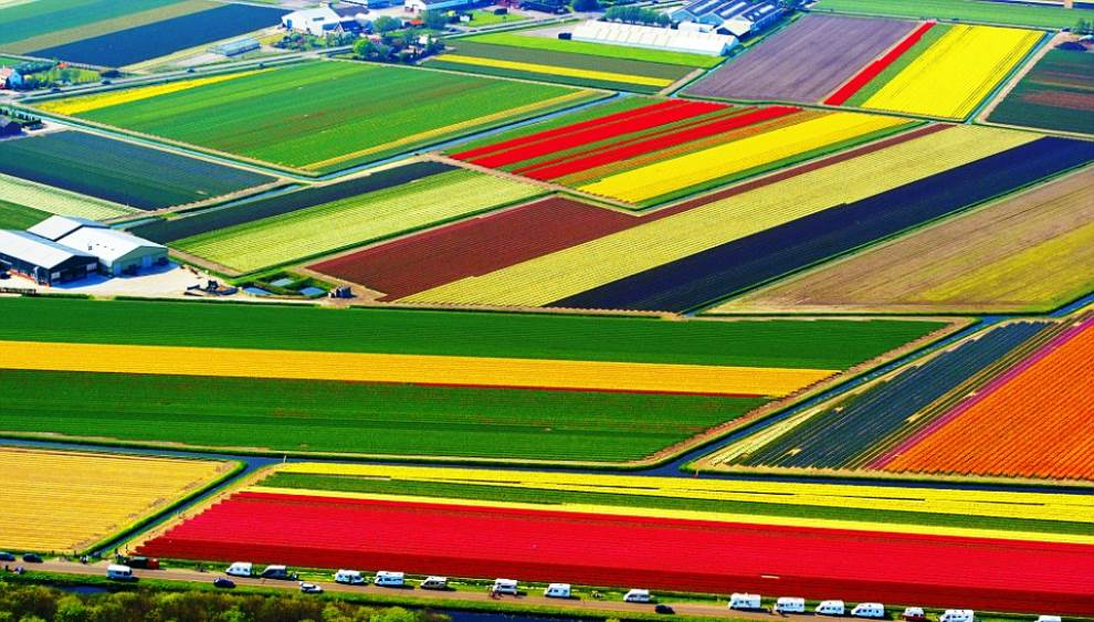 aerial-photography-tulip-fields.jpg