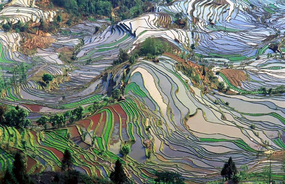 aerial-photography-yunna-china-rice-fields.jpg