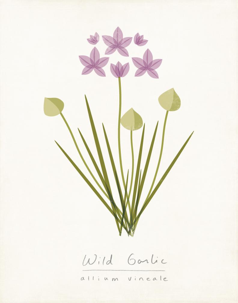 wild-garlic-amy-sullivan.jpg