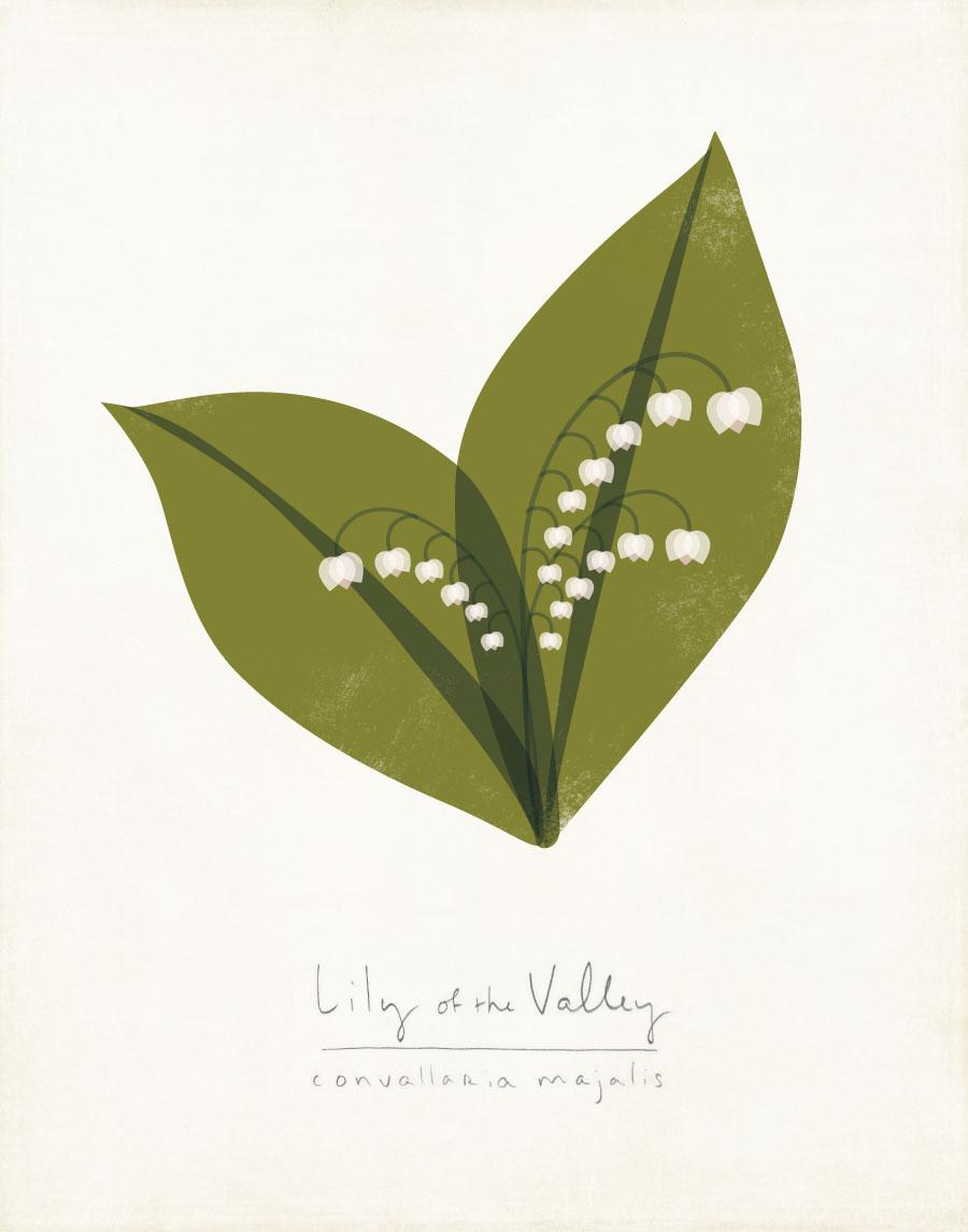 lily-valley-web.jpg