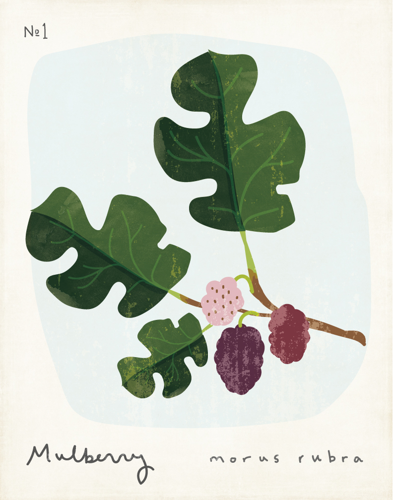 amy-sullivan-mulberry.jpg