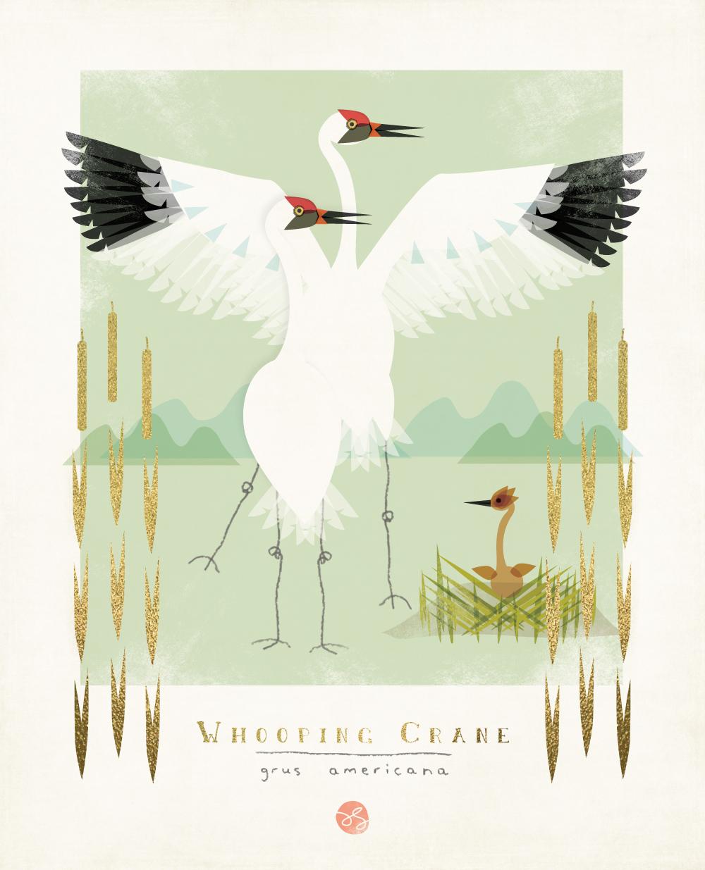 Whooping Crane Illustration