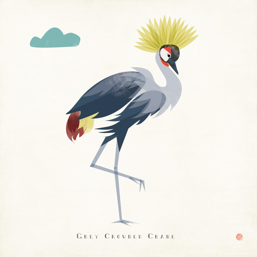 Grey Crowned Crane Illustration by Amy Sullivan