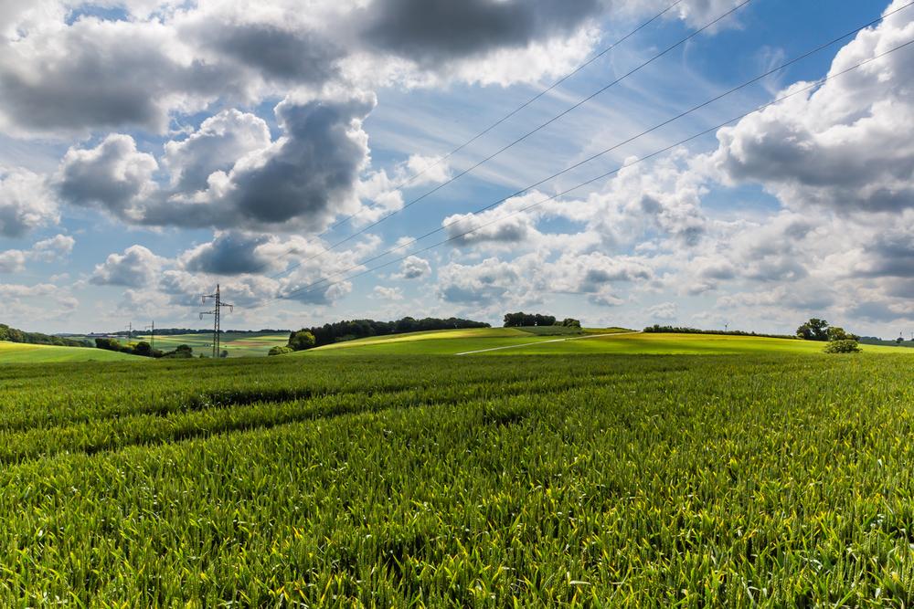 20130630 Landscaping 5D - 0953.jpg