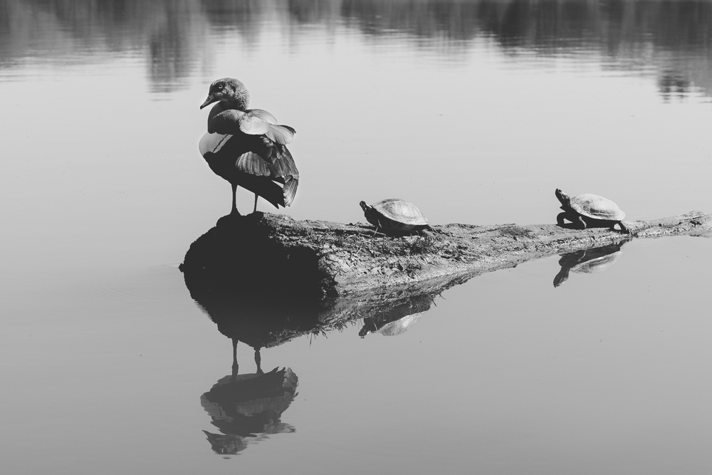 3. Three's Company at the lake in Echternach Shot with the Fuji X-E1 and the XF60mm lens