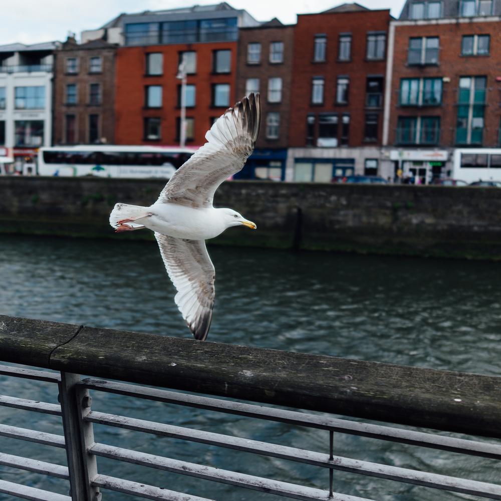 20140507 Dublin RX1R - 00854.jpg