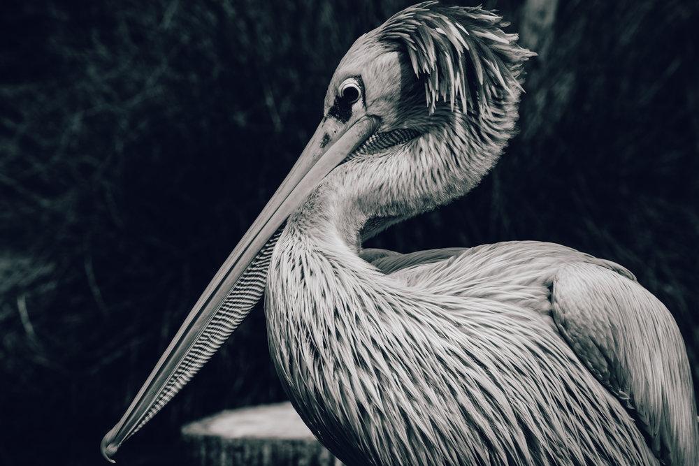 Zoo Amnéville-3.jpg