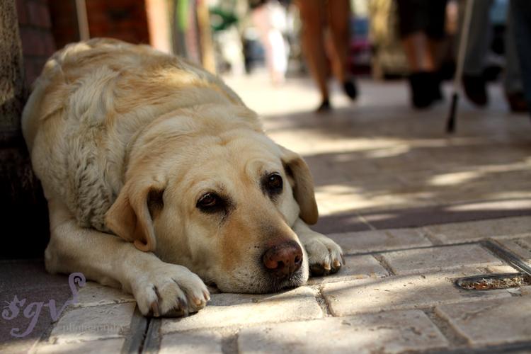 chien_dordogne3_web.jpg