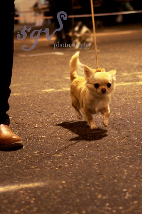 dog_show1_web.jpg